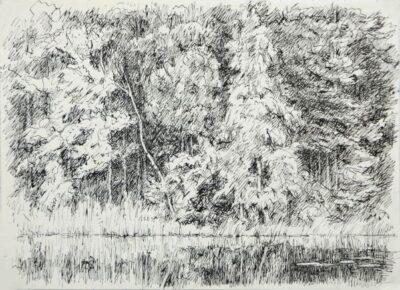Дерева над водою