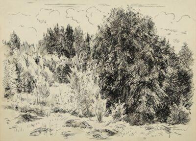 Дерева на узліссі